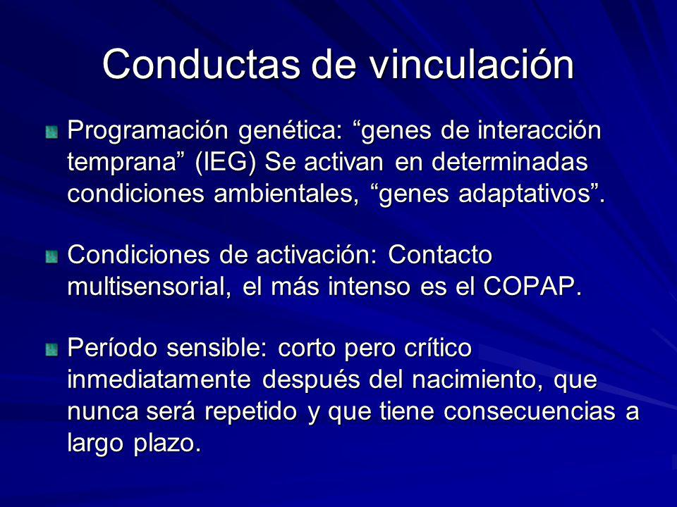 Conductas de vinculación Programación genética: genes de interacción temprana (IEG) Se activan en determinadas condiciones ambientales, genes adaptati