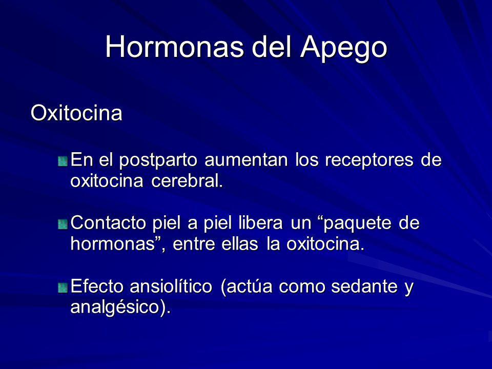 Hormonas del Apego Oxitocina En el postparto aumentan los receptores de oxitocina cerebral. Contacto piel a piel libera un paquete de hormonas, entre
