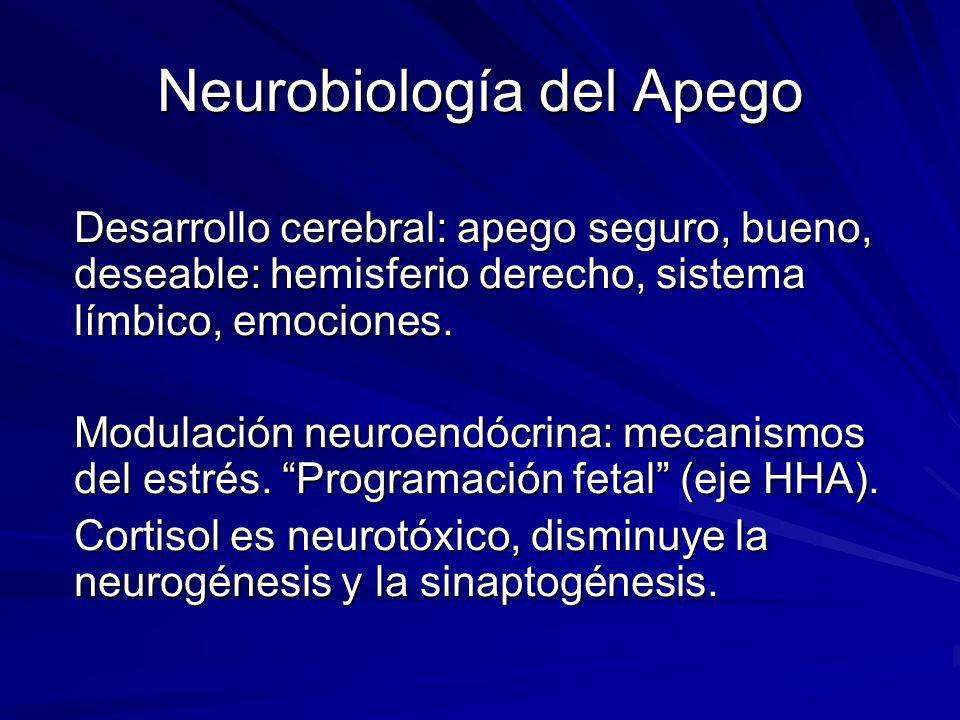 Neurobiología del Apego Desarrollo cerebral: apego seguro, bueno, deseable: hemisferio derecho, sistema límbico, emociones. Modulación neuroendócrina: