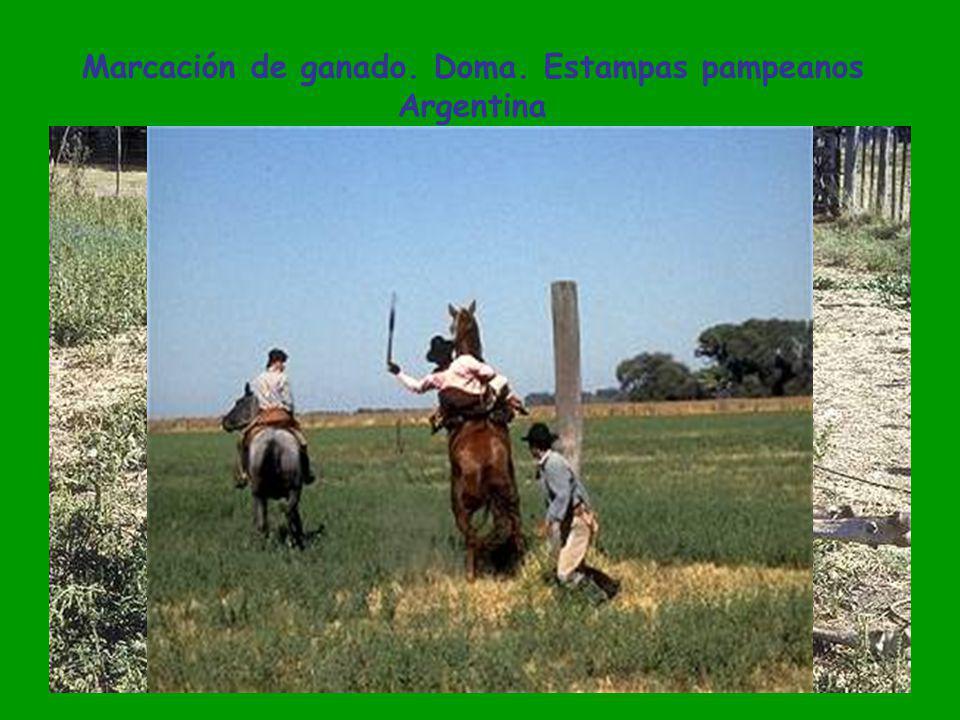 Casco de estancia. Gauchos de mateada junto al fogón La Pampa. Argentina