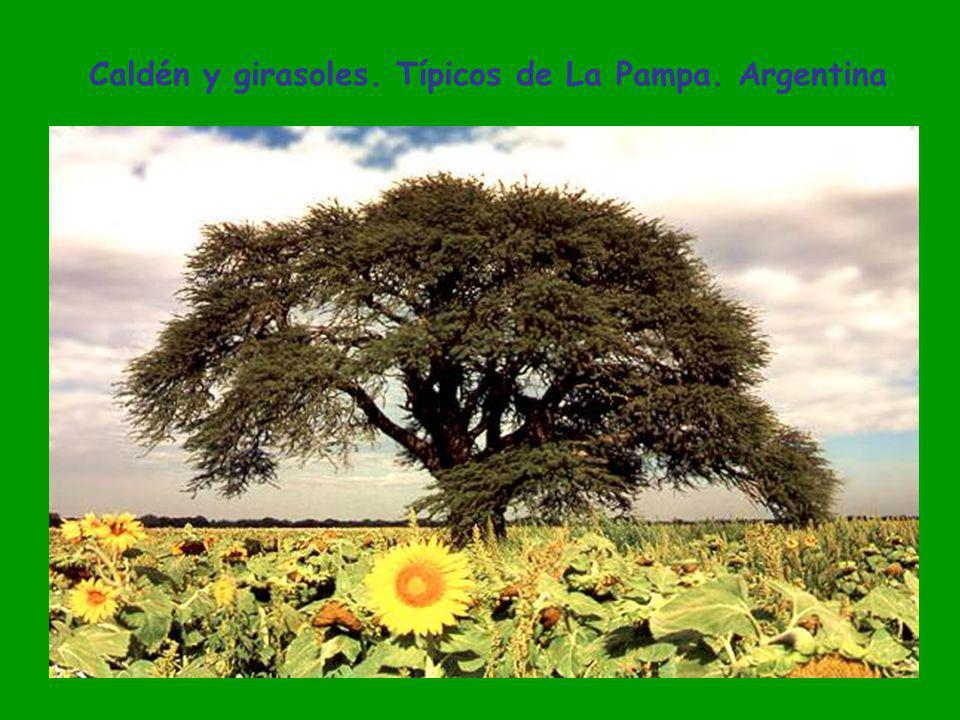 Laguna San Tomás. Santa Rosa. La Pampa. Argentina