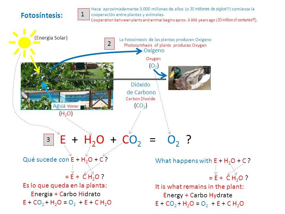 Dióxido de Carbono Carbon Dioxide (CO 2 ) Oxígeno Oxygen (O 2 ) 2 La Fotosíntesis de las plantas producen Oxígeno Photosynthesis of plants produces Oxygen Hace aproximadamente 3.000 millones de años (o 30 millones de siglos!!!) comienza la cooperación entre plantas y animales.
