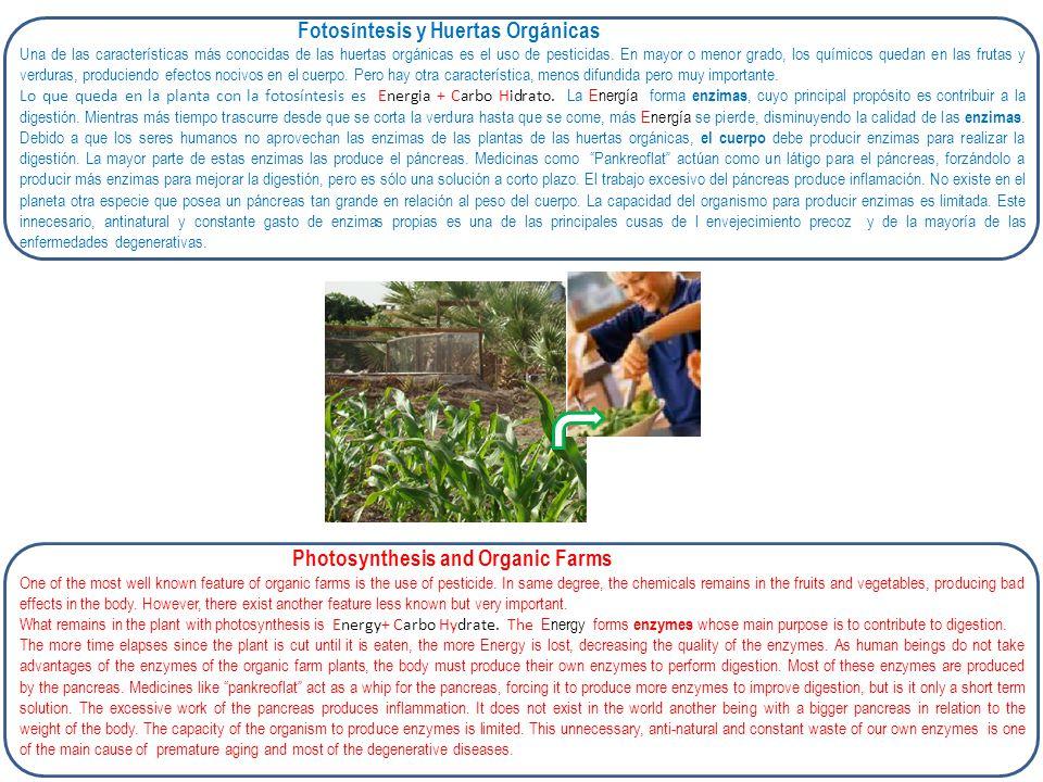 Fotosíntesis y Huertas Orgánicas Una de las características más conocidas de las huertas orgánicas es el uso de pesticidas. En mayor o menor grado, lo