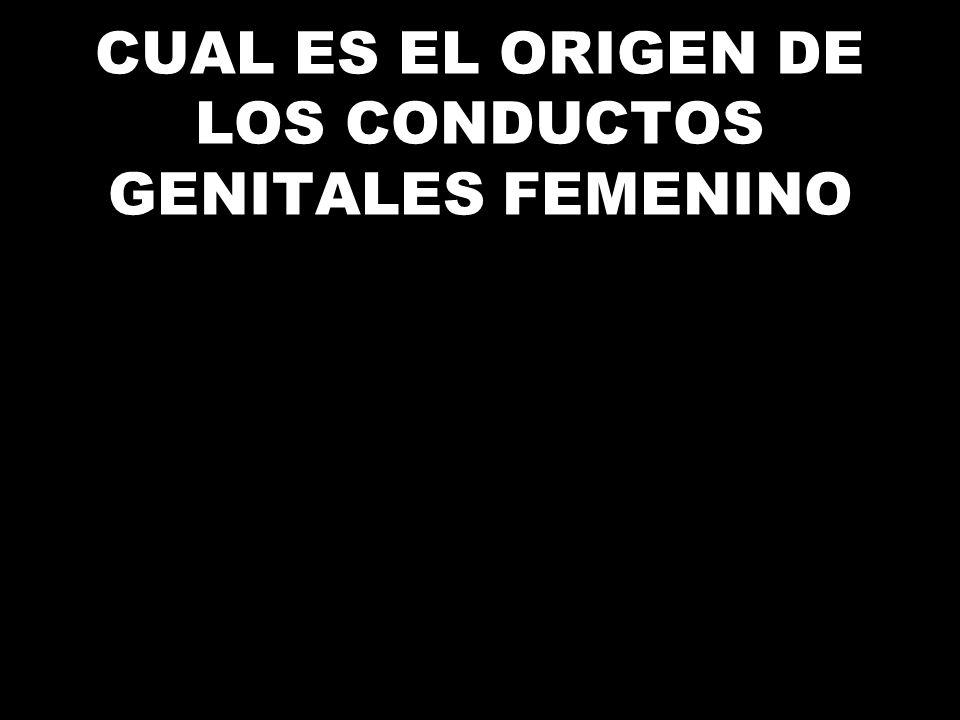 CUAL ES EL ORIGEN DE LOS CONDUCTOS GENITALES FEMENINO