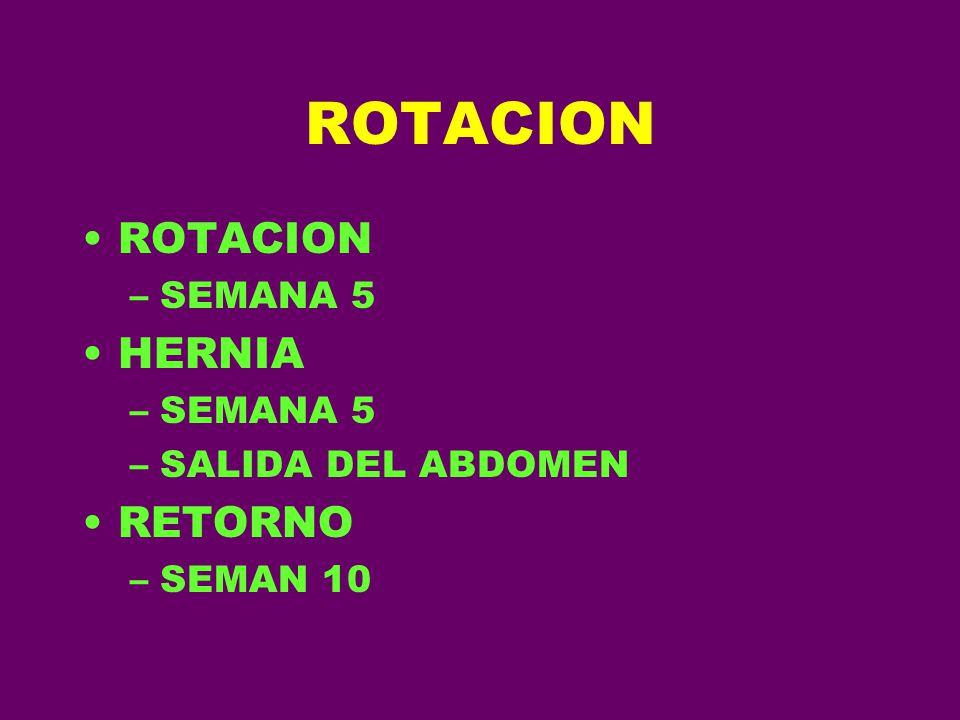 ROTACION –SEMANA 5 HERNIA –SEMANA 5 –SALIDA DEL ABDOMEN RETORNO –SEMAN 10