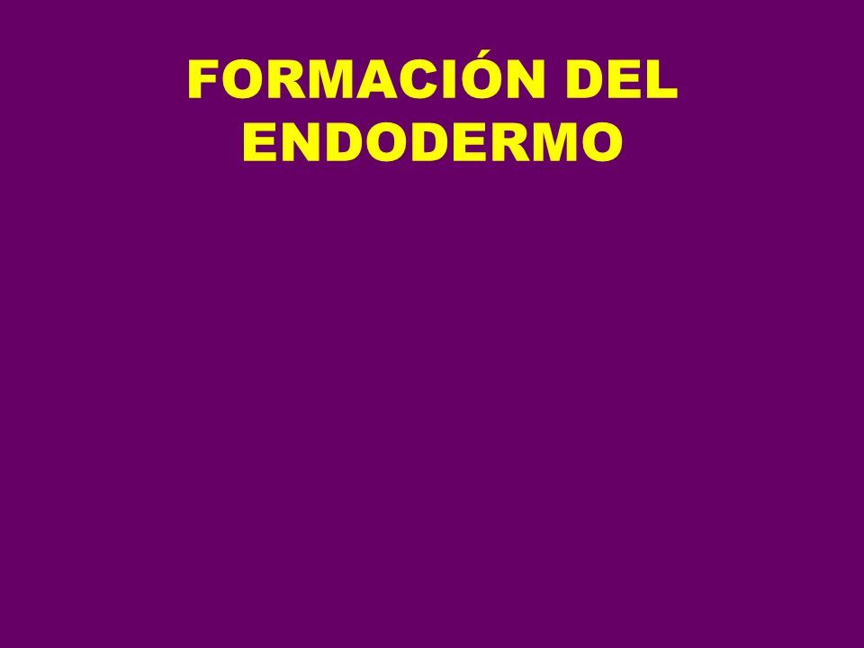 CLOACA RECTO CANAL ANAL (PARTE SUPERIOR) ESTRUCTURAS DEL APARATO URINARIO Y GENITAL