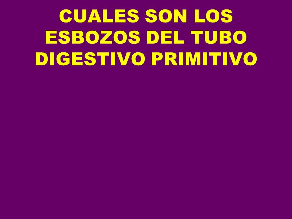 CUALES SON LOS ESBOZOS DEL TUBO DIGESTIVO PRIMITIVO