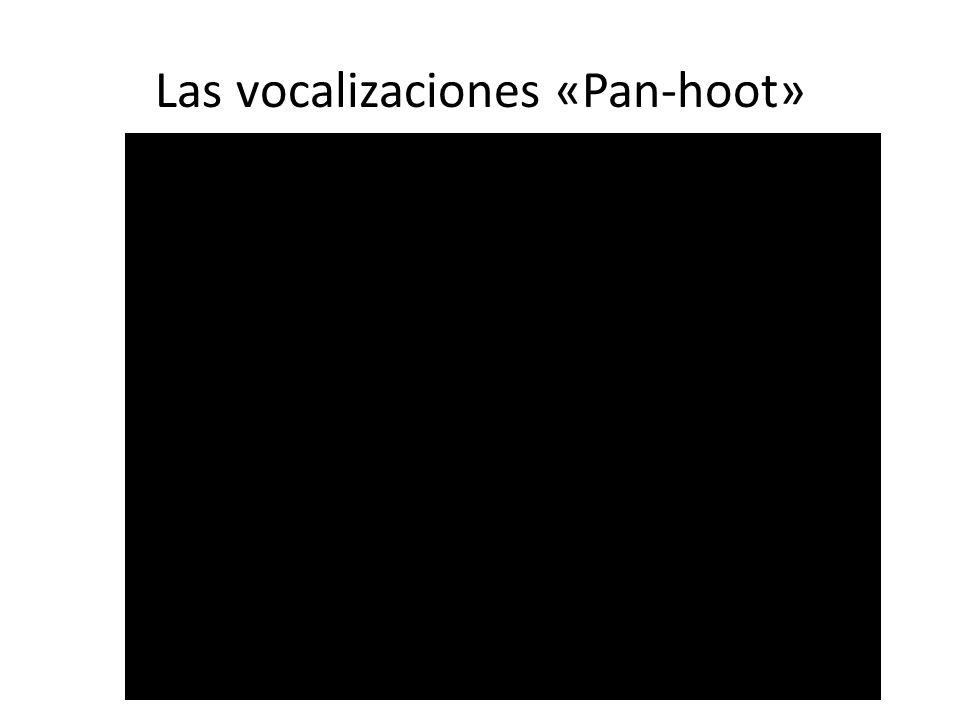 Las vocalizaciones «Pan-hoot»