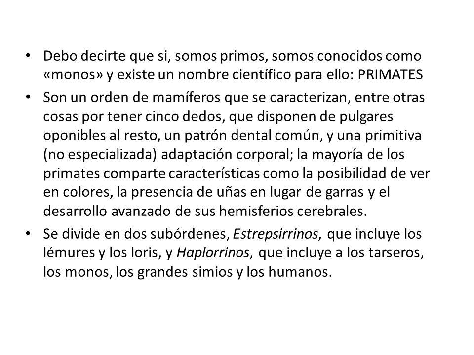 Debo decirte que si, somos primos, somos conocidos como «monos» y existe un nombre científico para ello: PRIMATES Son un orden de mamíferos que se car