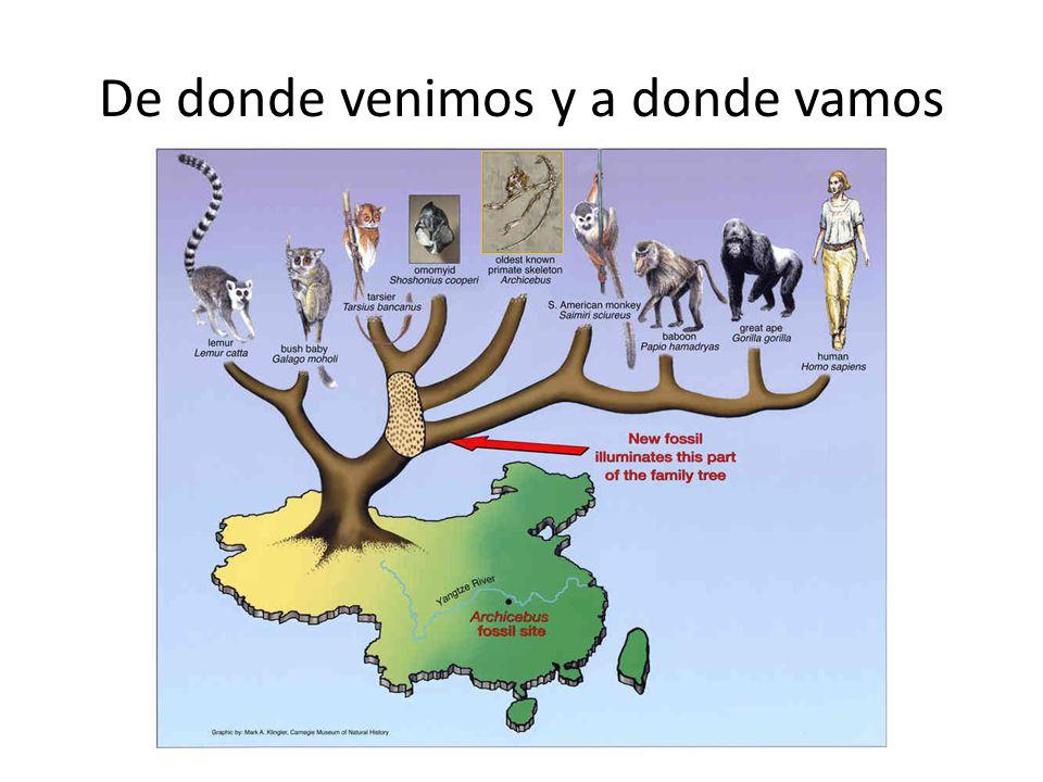 Mas allá de las características compartidas anteriormente citadas para el resto de los primates, son evidentes las diferencias físicas.