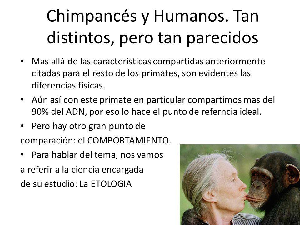 Mas allá de las características compartidas anteriormente citadas para el resto de los primates, son evidentes las diferencias físicas. Aún así con es