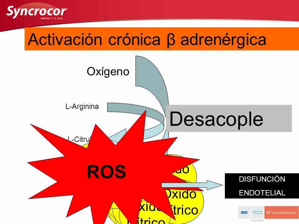 Actividad de ON Sintetasa: Normal L-Arginina L-Citrulina Oxígeno Oxido Nítrico Activación aguda β adrenérgica Oxido Nítrico NO-Sintetasa Activación cr