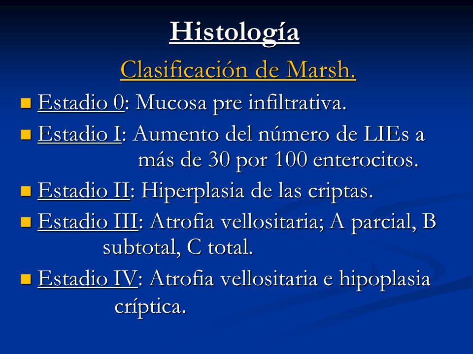 Histología Clasificación de Marsh. Estadio 0: Mucosa pre infiltrativa. Estadio 0: Mucosa pre infiltrativa. Estadio I: Aumento del número de LIEs a más