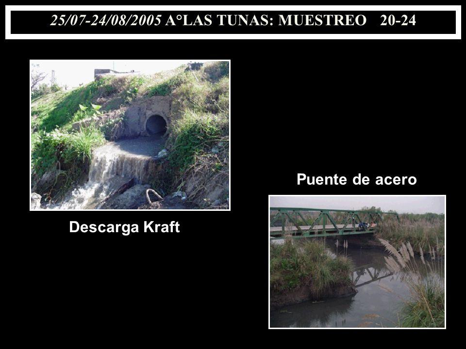 25/07-24/08/2005 A°LAS TUNAS: MUESTREO 20-24 Descarga Kraft Puente de acero