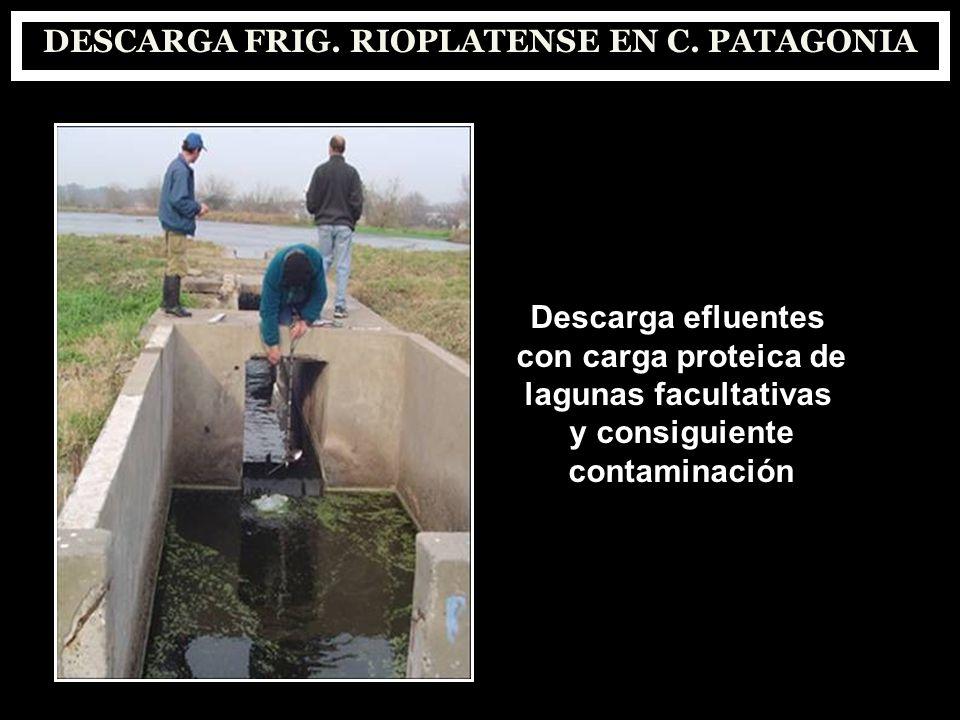 DESCARGA FRIG. RIOPLATENSE EN C. PATAGONIA Descarga efluentes con carga proteica de lagunas facultativas y consiguiente contaminación