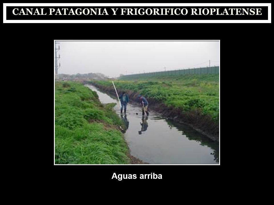 CANAL PATAGONIA Y FRIGORIFICO RIOPLATENSE Aguas arriba