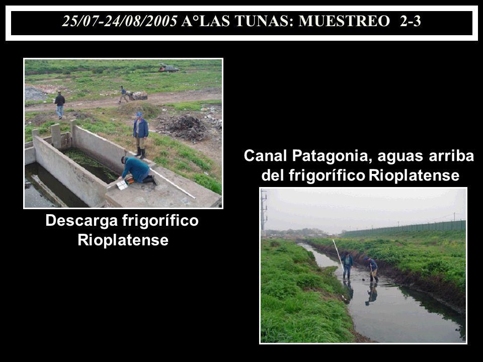 25/07-24/08/2005 A°LAS TUNAS: MUESTREO2-3 Descarga frigorífico Rioplatense Canal Patagonia, aguas arriba del frigorífico Rioplatense