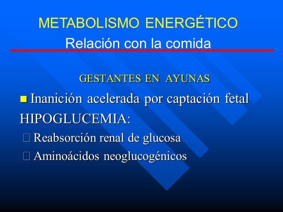 GESTANTES EN AYUNAS Inanición acelerada por captación fetal Inanición acelerada por captación fetalHIPOGLUCEMIA: Reabsorción renal de glucosa Reabsorción renal de glucosa Aminoácidos neoglucogénicos Aminoácidos neoglucogénicos METABOLISMO ENERGÉTICO Relación con la comida