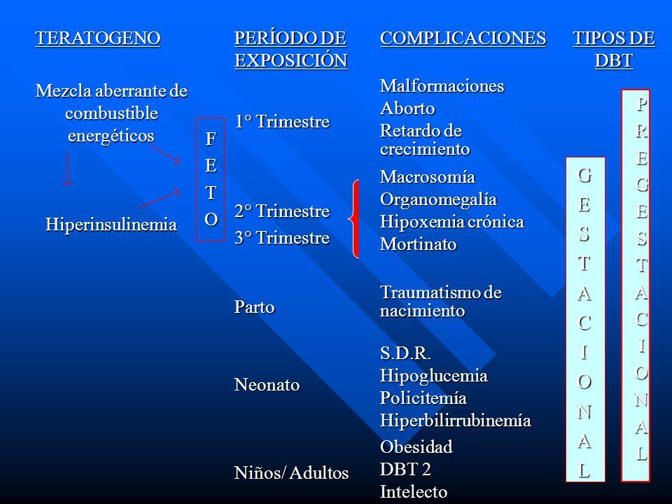TERATOGENO PERÍODO DE EXPOSICIÓN COMPLICACIONES TIPOS DE DBT Mezcla aberrante de combustible energéticos FETO 1° Trimestre MalformacionesAborto Retardo de crecimiento GESTACIONALPREGESTACIONAL Hiperinsulinemia 2° Trimestre 3° Trimestre MacrosomíaOrganomegalía Hipoxemia crónica Mortinato Parto Traumatismo de nacimiento Neonato S.D.R.HipoglucemiaPolicitemíaHiperbilirrubinemía Niños/ Adultos Obesidad DBT 2 Intelecto