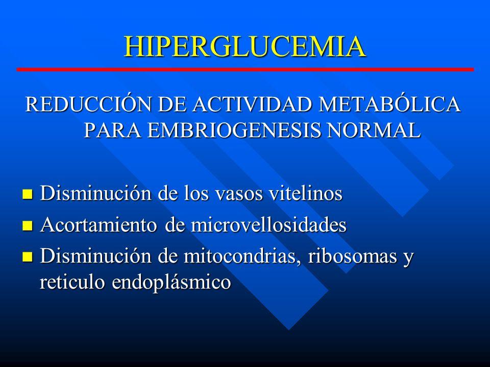 HIPERGLUCEMIA REDUCCIÓN DE ACTIVIDAD METABÓLICA PARA EMBRIOGENESIS NORMAL Disminución de los vasos vitelinos Disminución de los vasos vitelinos Acortamiento de microvellosidades Acortamiento de microvellosidades Disminución de mitocondrias, ribosomas y reticulo endoplásmico Disminución de mitocondrias, ribosomas y reticulo endoplásmico