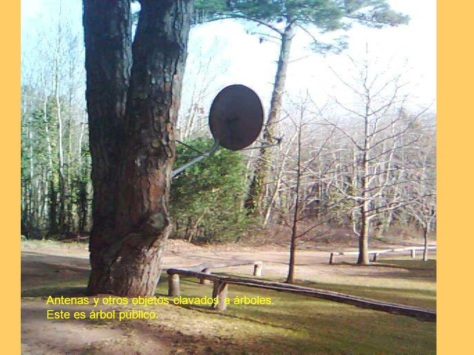 Antenas y otros objetos clavados a árboles. Este es árbol público.