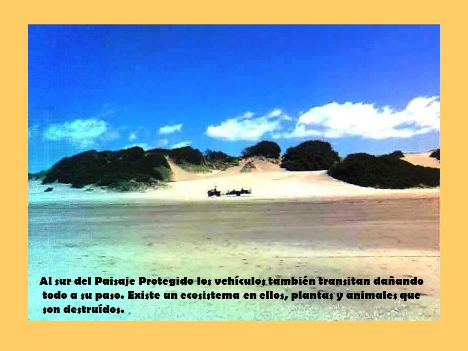 Al sur del Paisaje Protegido los vehículos también transitan dañando todo a su paso.