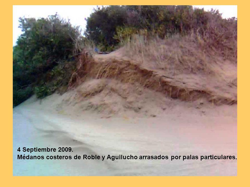 4 Septiembre 2009. Médanos costeros de Roble y Aguilucho arrasados por palas particulares.