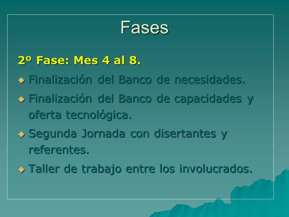 Fases 2º Fase: Mes 4 al 8. Finalización del Banco de necesidades. Finalización del Banco de necesidades. Finalización del Banco de capacidades y ofert