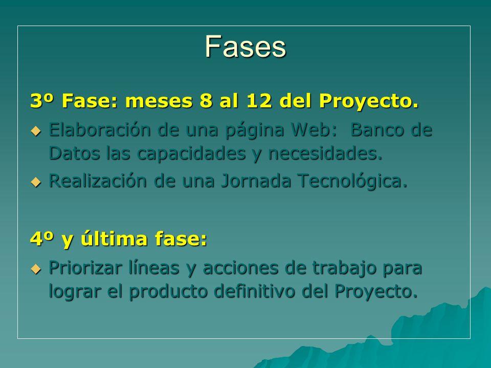 Fases 3º Fase: meses 8 al 12 del Proyecto. Elaboración de una página Web: Banco de Datos las capacidades y necesidades. Elaboración de una página Web: