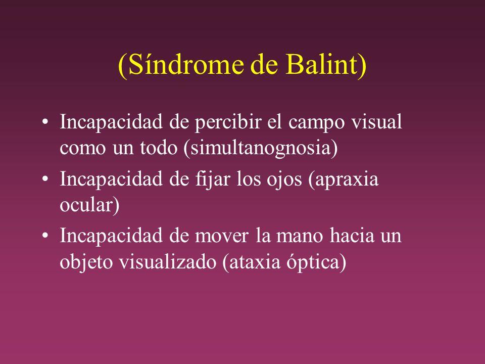 (Síndrome de Balint) Incapacidad de percibir el campo visual como un todo (simultanognosia) Incapacidad de fijar los ojos (apraxia ocular) Incapacidad de mover la mano hacia un objeto visualizado (ataxia óptica)