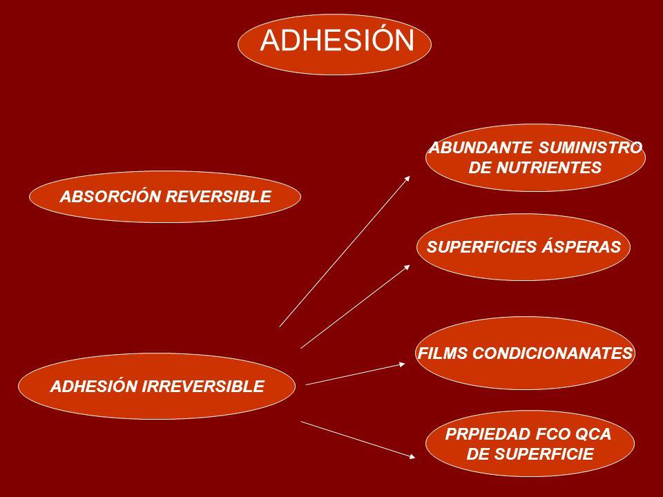 ADHESIÓN ABSORCIÓN REVERSIBLE ADHESIÓN IRREVERSIBLE FILMS CONDICIONANATES PRPIEDAD FCO QCA DE SUPERFICIE SUPERFICIES ÁSPERAS ABUNDANTE SUMINISTRO DE NUTRIENTES