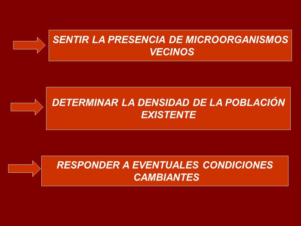 SENTIR LA PRESENCIA DE MICROORGANISMOS VECINOS DETERMINAR LA DENSIDAD DE LA POBLACIÓN EXISTENTE RESPONDER A EVENTUALES CONDICIONES CAMBIANTES