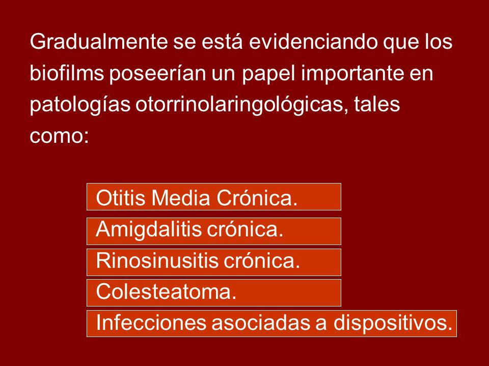 Gradualmente se está evidenciando que los biofilms poseerían un papel importante en patologías otorrinolaringológicas, tales como: Otitis Media Crónica.