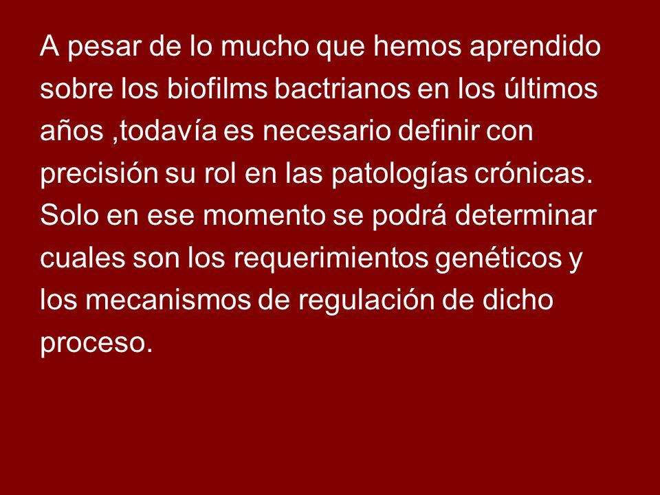 A pesar de lo mucho que hemos aprendido sobre los biofilms bactrianos en los últimos años,todavía es necesario definir con precisión su rol en las patologías crónicas.