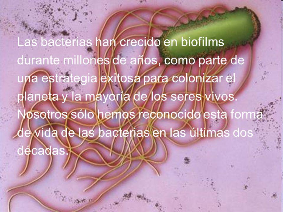 Las bacterias han crecido en biofilms durante millones de años, como parte de una estrategia exitosa para colonizar el planeta y la mayoría de los seres vivos.