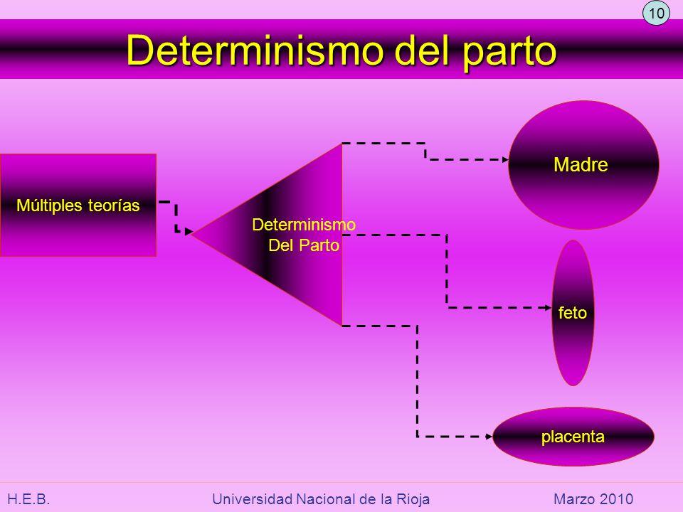 Determinismo del parto Múltiples teorías Madre placenta feto Determinismo Del Parto 10