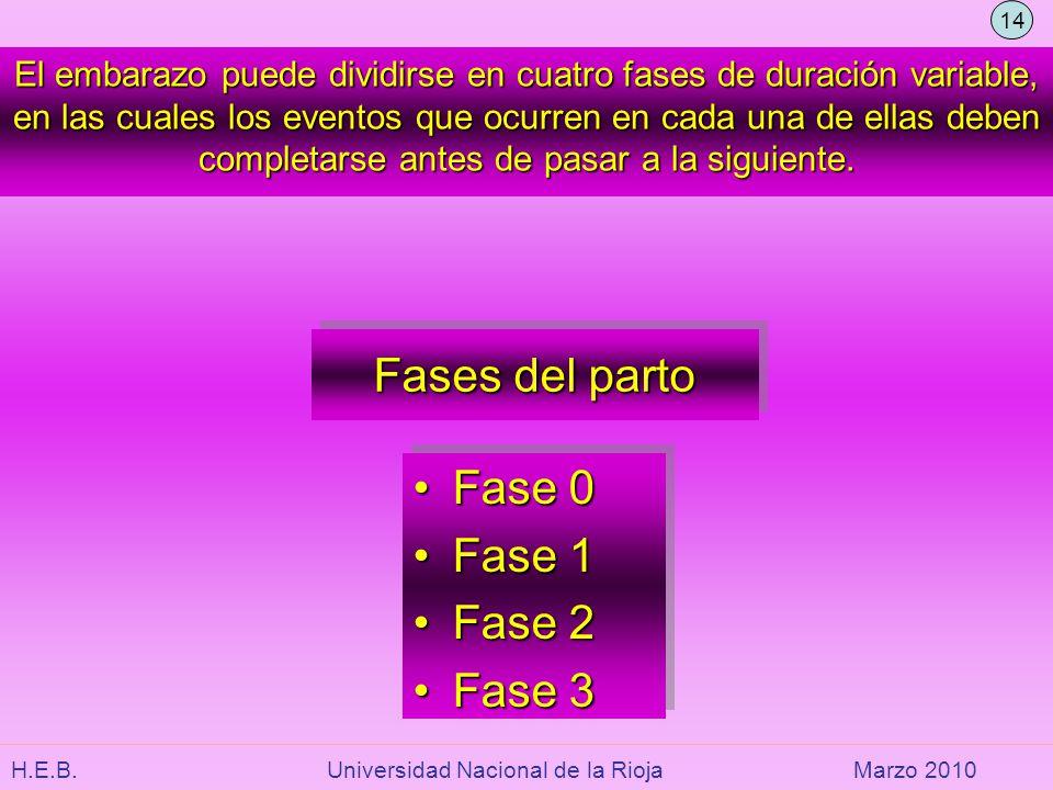 H.E.B. Universidad Nacional de la RiojaMarzo 2010 El embarazo puede dividirse en cuatro fases de duración variable, en las cuales los eventos que ocur
