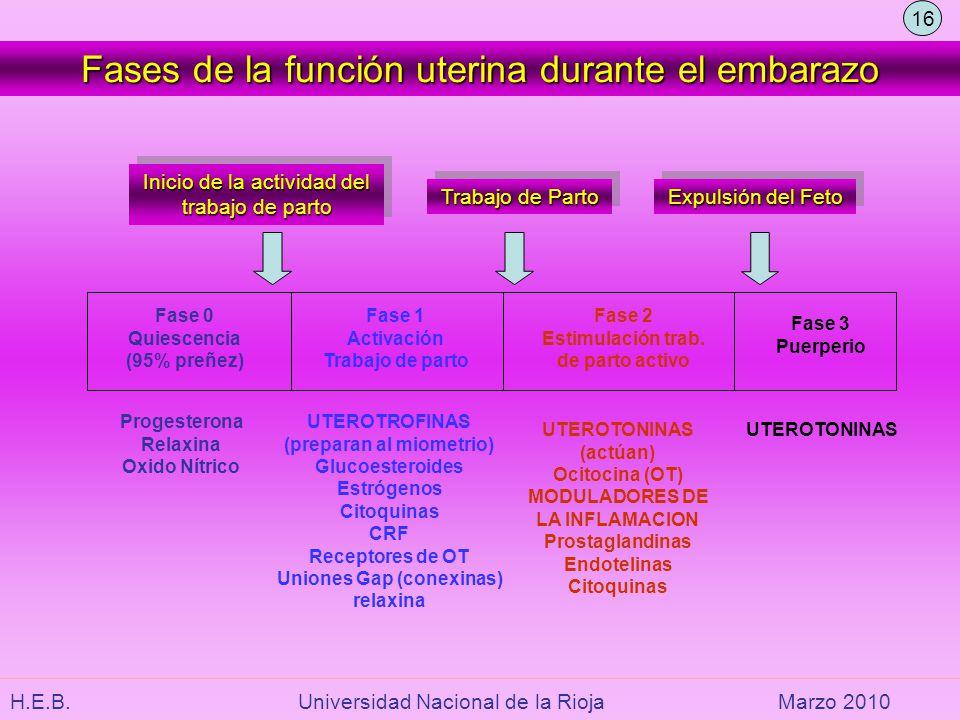 H.E.B. Universidad Nacional de la RiojaMarzo 2010 Fases de la función uterina durante el embarazo Inicio de la actividad del trabajo de parto Inicio d