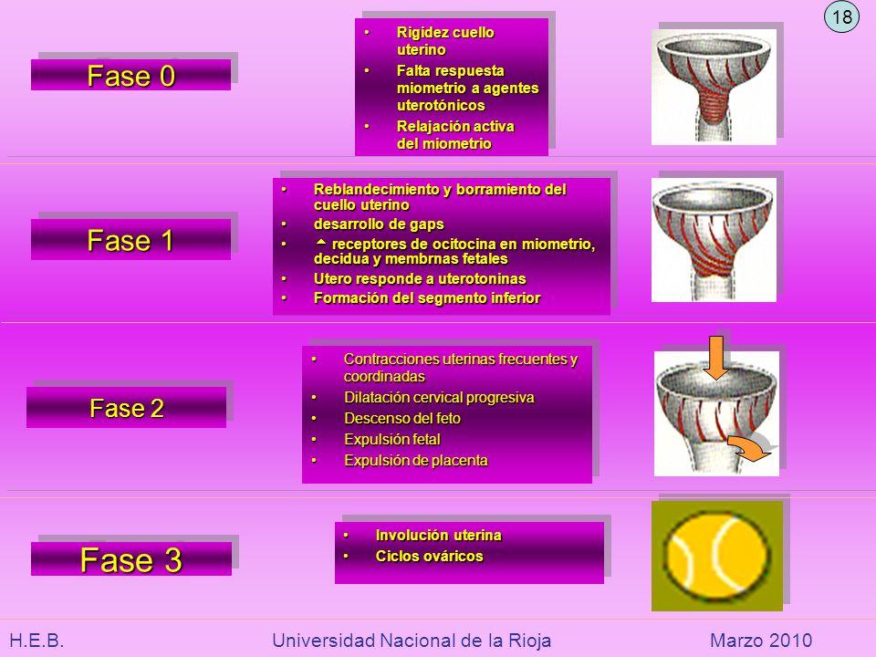 H.E.B. Universidad Nacional de la RiojaMarzo 2010 Fase 0 Rigidez cuello uterinoRigidez cuello uterino Falta respuesta miometrio a agentes uterotónicos