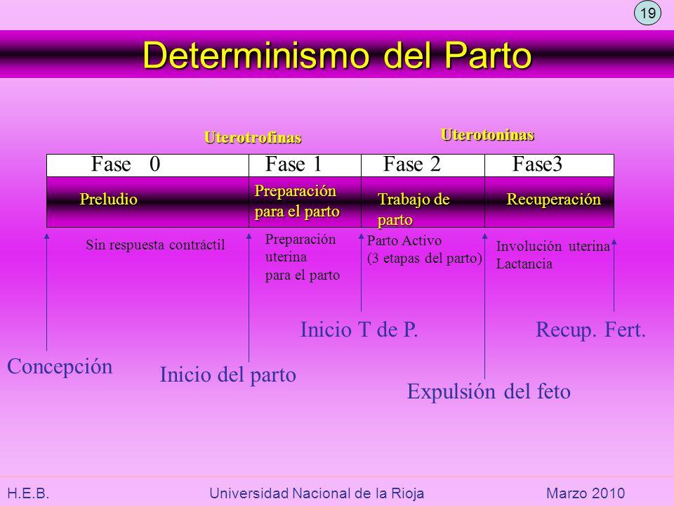 H.E.B. Universidad Nacional de la RiojaMarzo 2010 Determinismo del Parto Fase 0Fase 1Fase 2Fase3 Inicio del parto Inicio T de P. Expulsión del feto Re