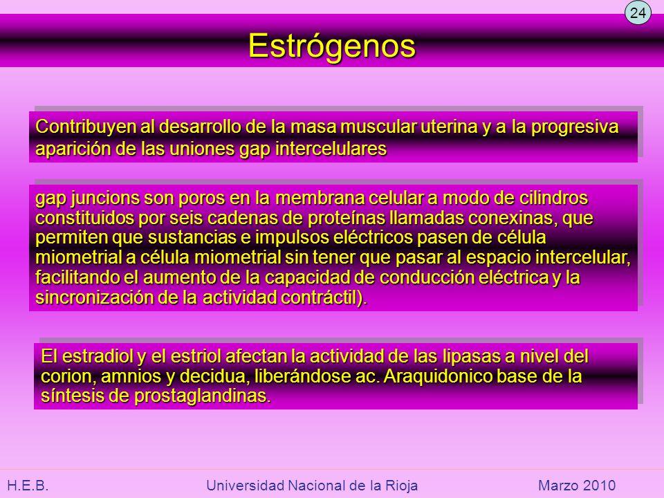 H.E.B. Universidad Nacional de la RiojaMarzo 2010 Contribuyen al desarrollo de la masa muscular uterina y a la progresiva aparición de las uniones gap