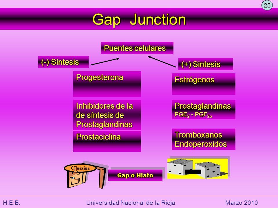 H.E.B. Universidad Nacional de la RiojaMarzo 2010 Gap Junction Puentes celulares Prostaciclina Estrógenos Prostaglandinas PGE 2 - PGF 2 Prostaglandina