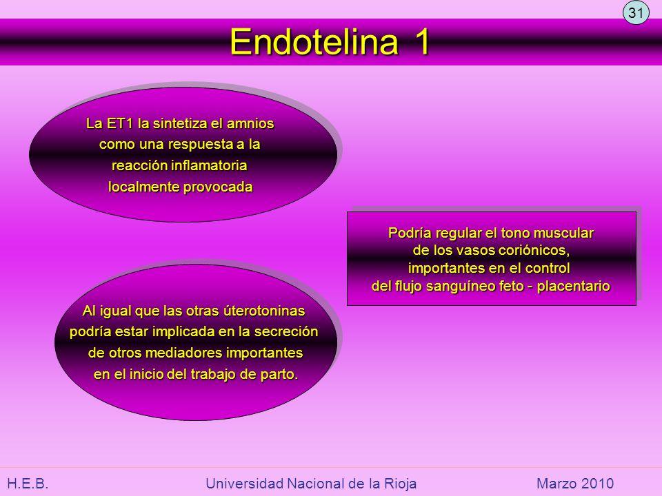 H.E.B. Universidad Nacional de la RiojaMarzo 2010 Endotelina 1 La ET1 la sintetiza el amnios como una respuesta a la reacción inflamatoria localmente