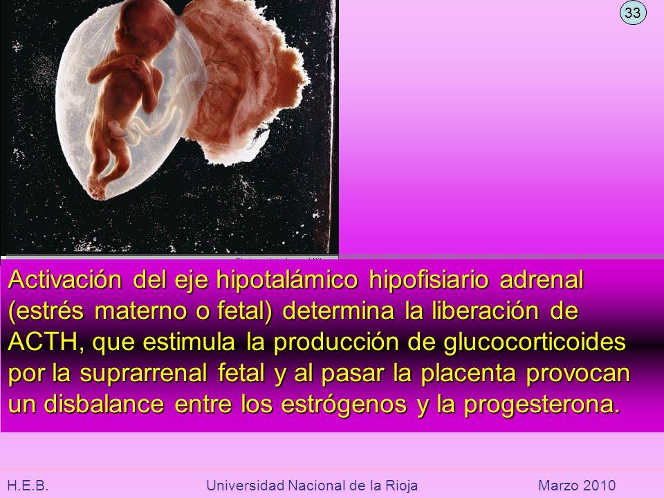 H.E.B. Universidad Nacional de la RiojaMarzo 2010 Activación del eje hipotalámico hipofisiario adrenal (estrés materno o fetal) determina la liberació