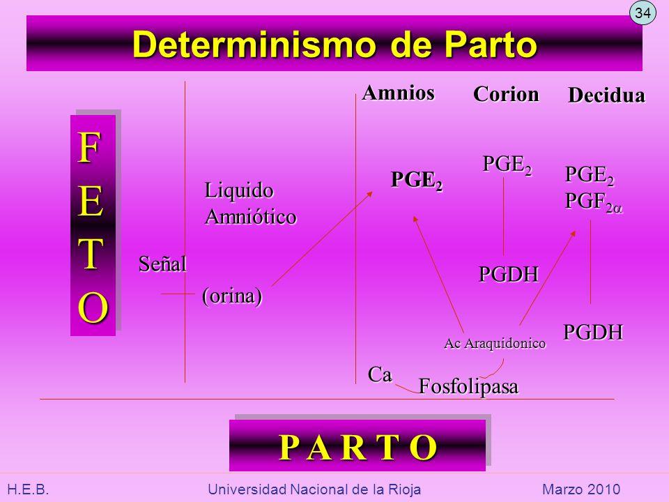 H.E.B. Universidad Nacional de la RiojaMarzo 2010 Determinismo de Parto FETOFETOFETOFETO FETOFETOFETOFETO LiquidoAmniótico Amnios Corion Decidua PGE 2