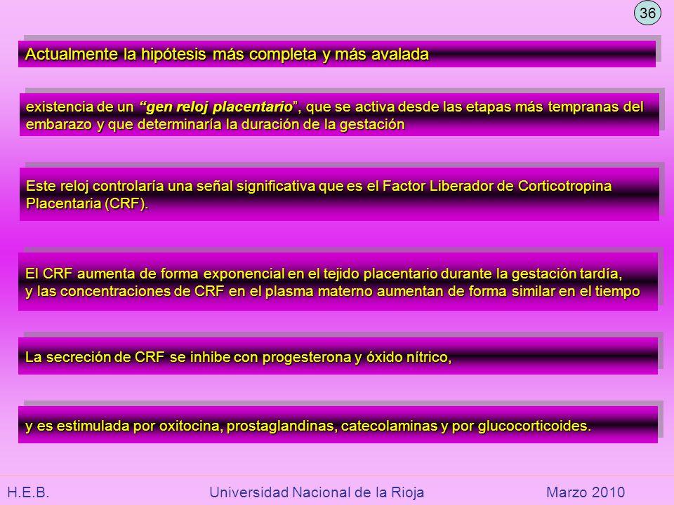 H.E.B. Universidad Nacional de la RiojaMarzo 2010 Actualmente la hipótesis más completa y más avalada existencia de un gen reloj placentario, que se a