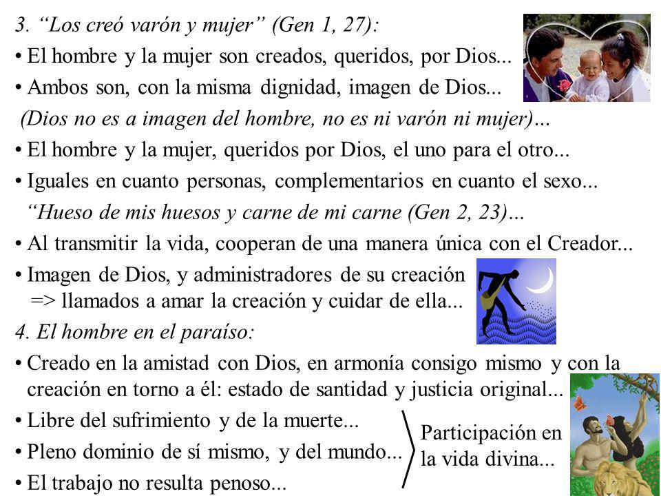 3. Los creó varón y mujer (Gen 1, 27): El hombre y la mujer son creados, queridos, por Dios... Ambos son, con la misma dignidad, imagen de Dios... (Di