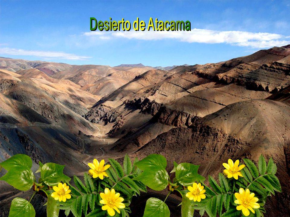 En un año lluvioso, el desierto se convierte en mar, en un mar de flores.