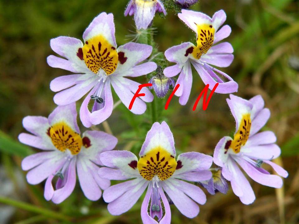 El fenómeno del desierto florido provoca un fuerte impacto sobre el sistema ecológico de la zona.