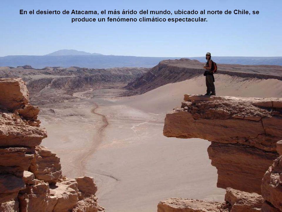 En el desierto de Atacama, el más árido del mundo, ubicado al norte de Chile, se produce un fenómeno climático espectacular.